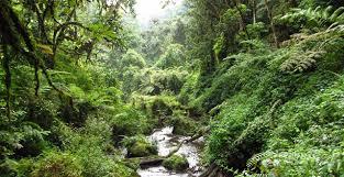 Zika: nella foresta in Uganda dove è nato il virus (FOTO)4
