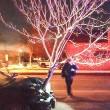 Viaggia in auto con albero da 5 metri nel cofano