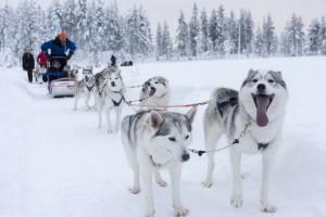 Guarda la versione ingrandita di Cinque motivi per visitare la Lapponia finlandese