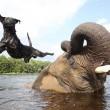 Bella e Bubbles, cane ed elefante amici per la pelle7
