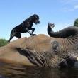 Bella e Bubbles, cane ed elefante amici per la pelle8