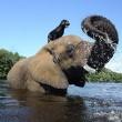 Bella e Bubbles, cane ed elefante amici per la pelle
