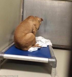 Cane depresso fissa il muro: stava per essere adottato 2