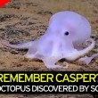 Casper polpo fantasma5
