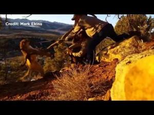 Guarda la versione ingrandita di YOUTUBE Puma soffia al guardiacaccia che lo libera