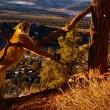 Puma soffia al guardiacaccia che lo libera 5