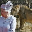 Regina Elisabetta allo zoo, leonessa si lecca i baffi2