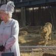 Regina Elisabetta allo zoo, leonessa si lecca i baffi6