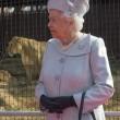 Regina Elisabetta allo zoo, leonessa si lecca i baffi5