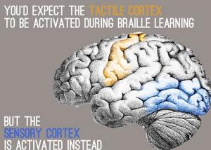 Cervello, ecco come potenziarlo rendendolo più flessibile