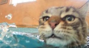 YOUTUBE Gatto che nuota insegnò a bimba autistica a parlare
