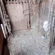 Canile lager con carcasse di cani in frigo VIDEO 5