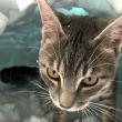 VIDEO YOUTUBE Gatto Boots si costruisce un igloo nella neve