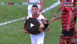 Guarda la versione ingrandita di YouTube, Brasile: cane invade campo e calciatori...
