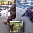 Tornano dalle vacanze trovano coccodrillo in piscina3