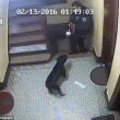 Poliziotto spara cane che scodinzola a New York 4