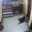 Poliziotto spara cane che scodinzola a New York 3
