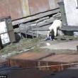 YOUTUBE Russia, cane e donna gettati nella gabbia dell'orso5