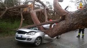 Laudomia Pucci indagata: omicidio colposo per albero caduto
