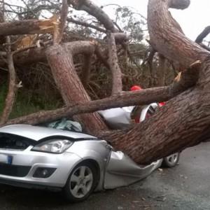 """Ardea, albero killer: """"omicidio colposo"""" per il proprietario"""