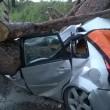 Ardea, albero schiaccia auto: 2 morti, 1 ferito 4