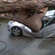 Ardea, albero schiaccia auto: 2 morti, 1 ferito 3