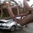 Ardea, albero schiaccia auto: 2 morti, 1 ferito 2