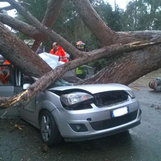 Ardea, albero schiaccia auto: 2 morti, 1 ferito