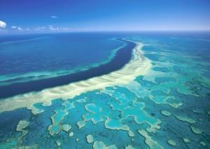 Australia, la Grande barriera corallina è diventata bianca