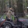 Cane guida trattorino e distrae troupe tv che filma tornado03