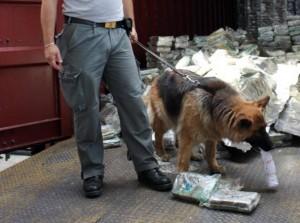 Guarda la versione ingrandita di Cani poliziotto (foto d'archivio Ansa)