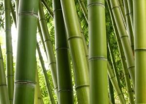 Padova. Cade su cespuglio bambù e rimane infilzato: grave