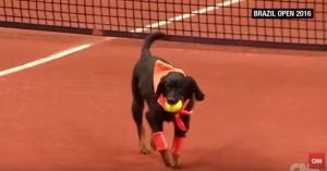 Cani randagio raccattapalle ai Brasil Open