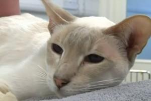 YOUTUBE Gatto sopravvive 8 giorni in scatola spedita per posta