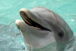 Delfini spia cercansi a Mosca: servono 5 per mettere le mine