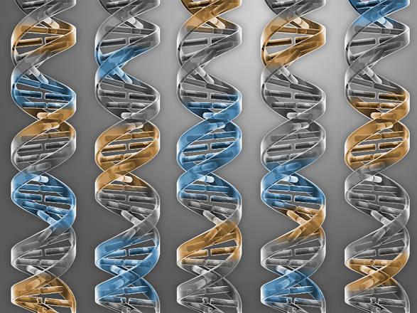Primo batterio sintetico con Dna minimo: ha solo 473 geni03
