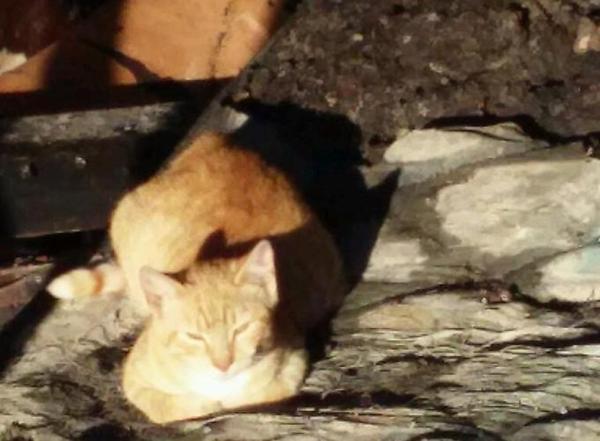 Gatti sopravvivono a incendio e...tornano a cercare padrone