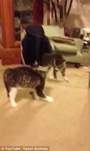 YOUTUBE Gatto davanti a specchio balla come Michael Jackson