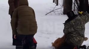 Cucciolo leone a guinzaglio attacca bimbo nel parco