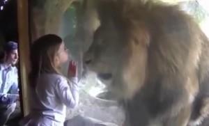 YOUTUBE Bambina allo zoo dà bacio a leone che reagisce così
