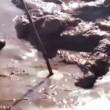 "YOUTUBE messico: 4m di ""cosa"" i 4n spiaggia. Scienziati..."