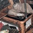 YOUTUBE Filippine, mummia su yacht. Mistero del tedesco