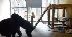 Cuccioli orfani di orso giocano: l'incontro commuove