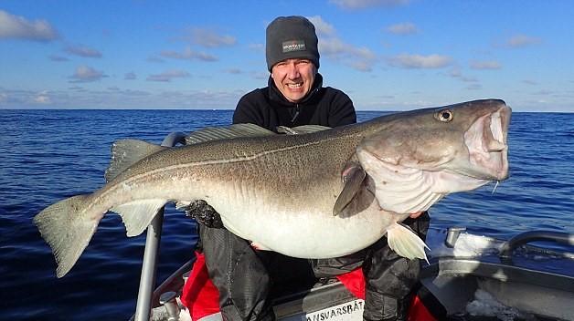 Norvegia, britannico pesca merluzzo da 42 chili2