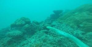 Lotta serpente marino e pesce pietra, chi vince