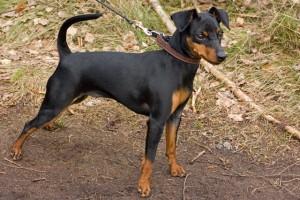 Guarda la versione ingrandita di Abbandona il suo cane all'ecocentro di Cassola: denunciato