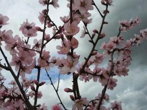 Primavera, il primo giorno. Ma per il bel tempo ci manca...