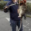 Ratto gigante in parco giochi per bimbi a Londra: lungo 1,2m