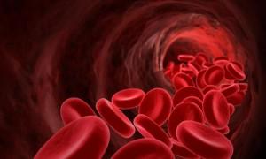 Sangue, le sette molecole della giovinezza