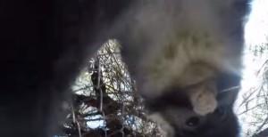 Scimmia ruba GoPro allo zoo e si scatta un selfie